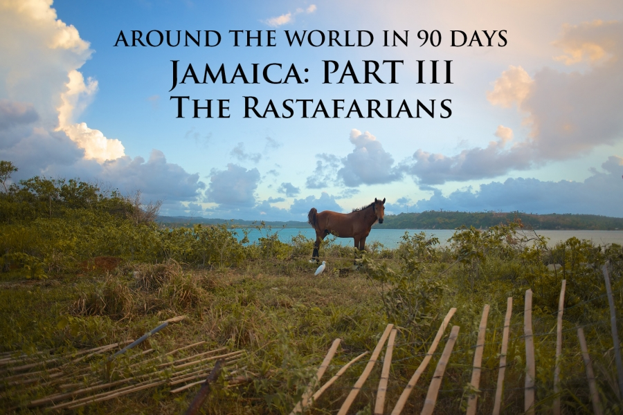 Photo of a wild horse in Jamaica, owned by a Rasta